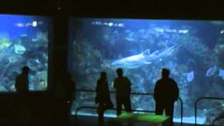 Veracruz acuario