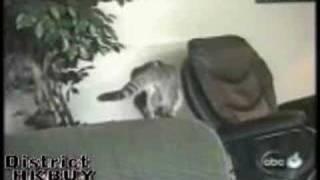 猫最強伝説