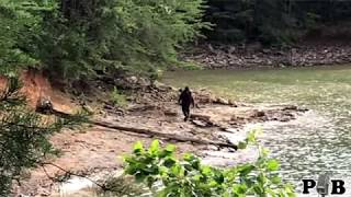 Two New Bigfoot Vids - (commentary)