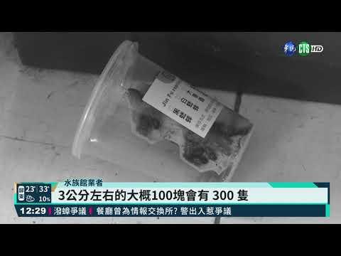 早預謀! 雙北水族館蟑螂案發前被買光|華視新聞 20210504