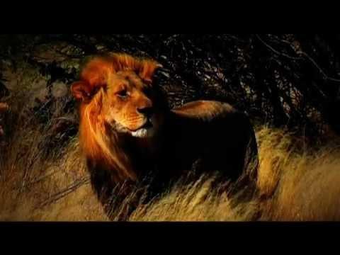 Botswana Tourism - Promo Video