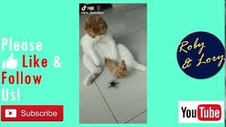 My Cat Annoying And Fiddling My Fingertip Gyro! Funny Kitten Video