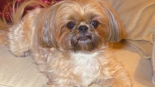 Woman Outraged After DNA Test Reveals $1,750 Dog Isn't the Breed She Wanted