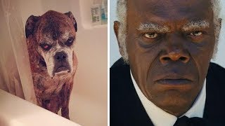 15+ Animals That Exactly Look Like Celebrities And Famous People
