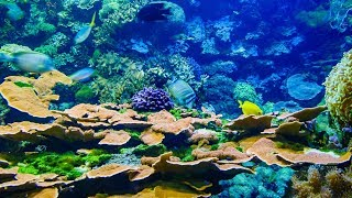 AQUARIUM CORAL REEF COLLECTION BEST RELAXING MUSIC  SLEEP MUSIC 4K