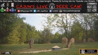 Cajun's Live Weather/Deer Cam for Friday, September 21, 2018  .... In Memory of my Dad!