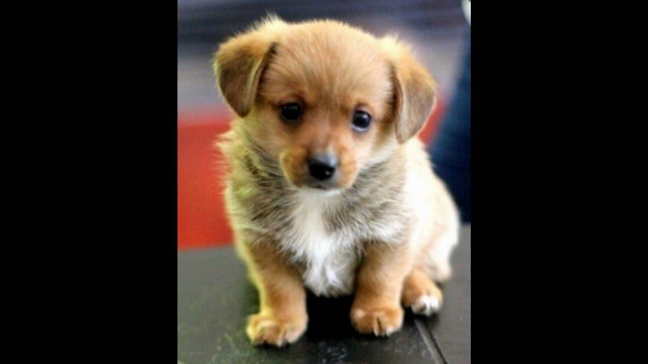 Hunde Videos Kostenlos