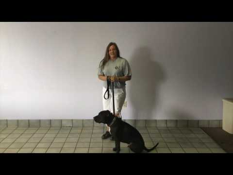 Dog com's Basic Training Series: The Sit Stay