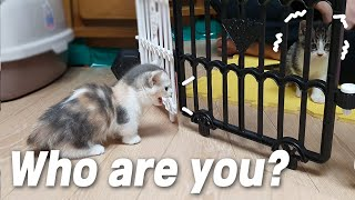 The First Meeting Of Two Baby Cats, Xuni was Hissing!│Episode 1