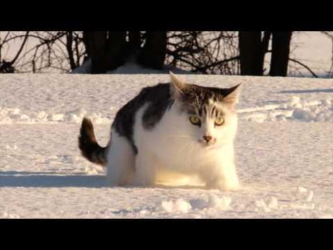 La grace du chat dans la neige