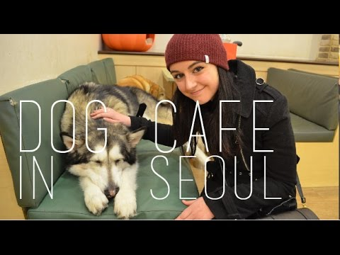 Visiting a Dog Cafe in Seoul