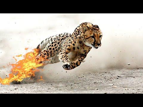 Кои се најбрзите животни во светот и со колкава брзина можат да се движат?