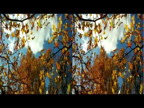 "Beautiful 3D Video ""Fall Leaves"" YT3D Stereoscopic HD 3DTV"