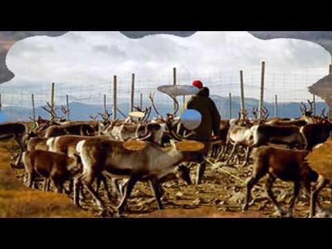VästanVind Jojk - Renar - Reindeers