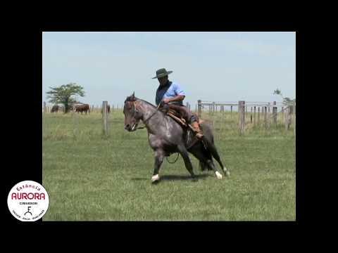 Garanhão - Xiqui Cimarron