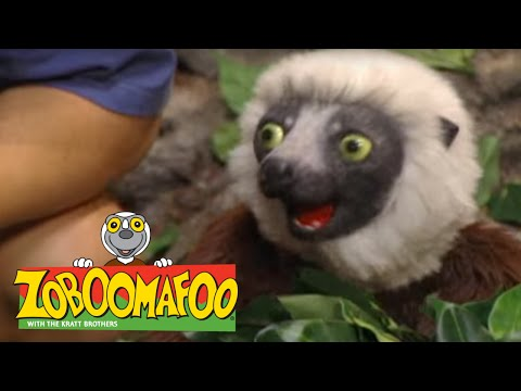 Zoboomafoo 205 Pop Goes The Tiger Full Episode Videomovilescom