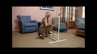 Capybara Hurdles 2.0