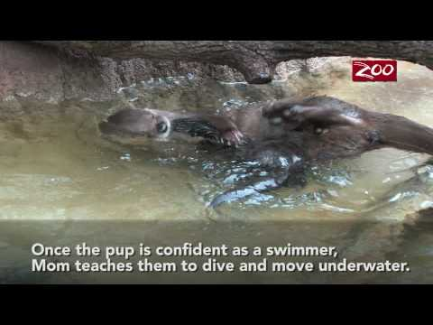 Otter Pups Swim Lesson