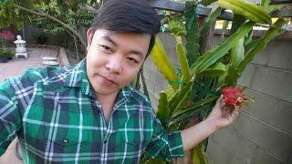 Nhà vườn Quang Lê ở Mỹ rợp bóng trái cây Việt