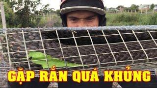Kinh Dị Bẫy Dính Rắn Hổ Mang Khủng Nhất  3Kg (Clip1) #LeTuyenXinh   Serious snake