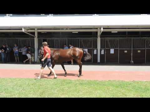 Regal Bloodstock - Inglis Classic Sales Purchase - Lot 85