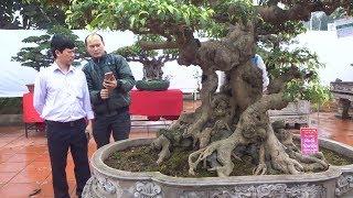 Anh Vân trả 700 triệu không đón được em này về nhưng vẫn lưu luyến - bonsai exhibition in Van Giang
