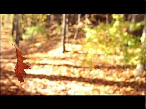 Hjerlmuda - Dance of the Falling Leaves