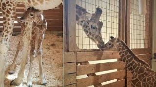 Here Is The Meaning Behind April The Giraffe's Baby Name