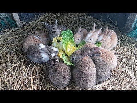 아기토끼(rabbit) 10마리 낳은지 21일 처음 먹이를 잘먹고 깡총깡총 재롱부립니다~
