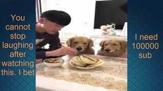 Try Not To Laugh Challenge - Funny Cat  Dog Vines compilation 2018