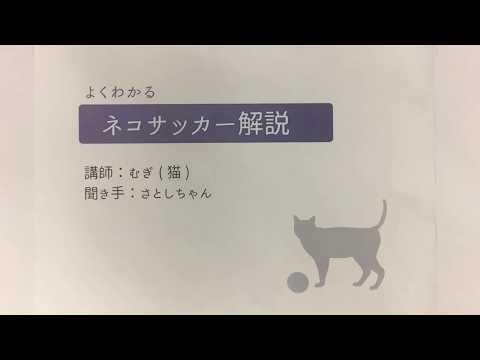 むぎ(猫)「よくわかるネコサッカー解説」