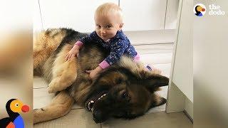 Big Dog Loves His Little Baby Girl | The Dodo
