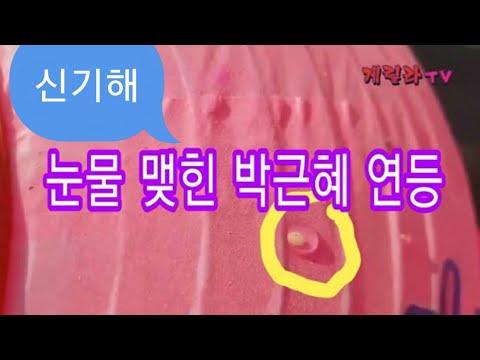 눈물 맺힌 박근혜 대통령 석방 어마무시 연등
