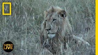 Safari Live - Day 344 | National Geographic