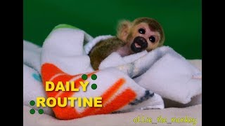 Baby Monkey oLLie Delightful Daily Routine