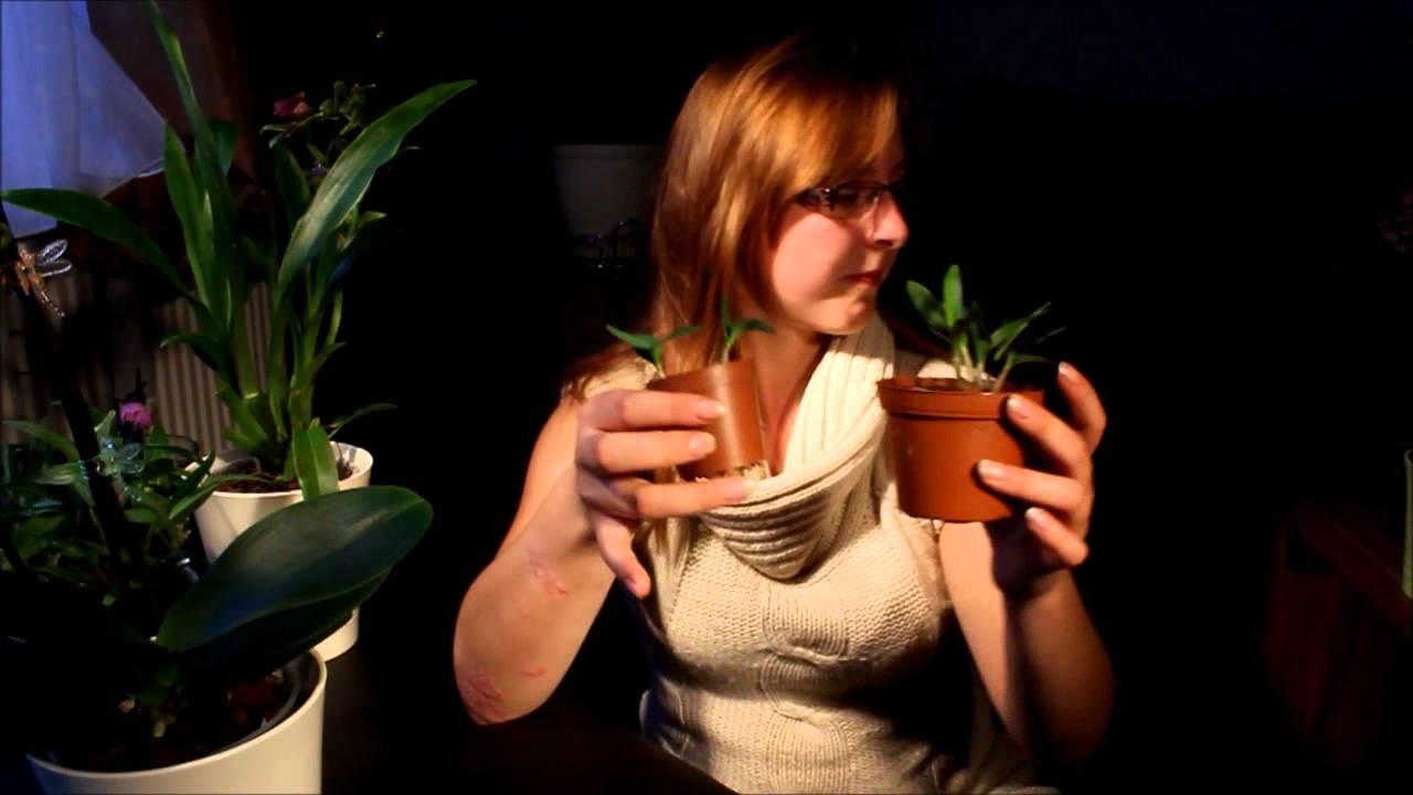generative und vegetative vermehrung von orchideen youtube. Black Bedroom Furniture Sets. Home Design Ideas