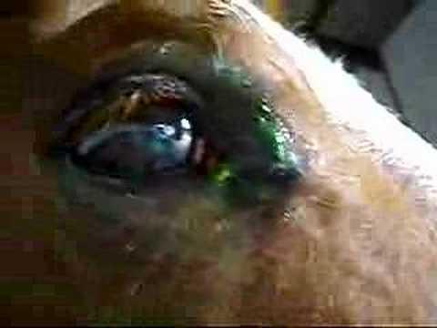 Ulceracija rožnjače konja