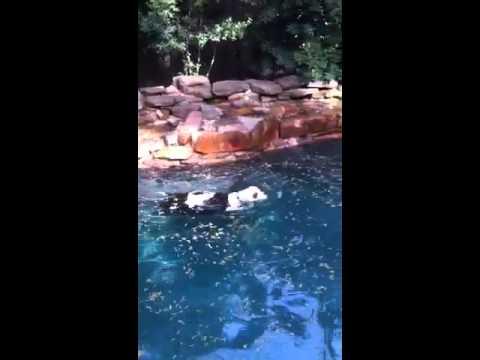 Homer Swimming