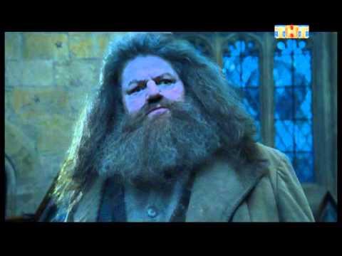 Реклама Гарри Поттера на ТНТ-Люди не летают (Ленинград)