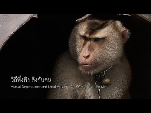 Mutual Dependence and Local Way of Life: Of Monkeys and Men by MONO29 News