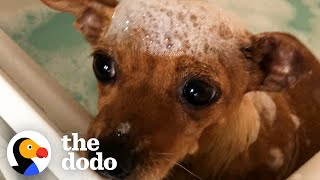 Tiny Scared Dog Loves Her Bubble Baths | The Dodo Foster Diaries