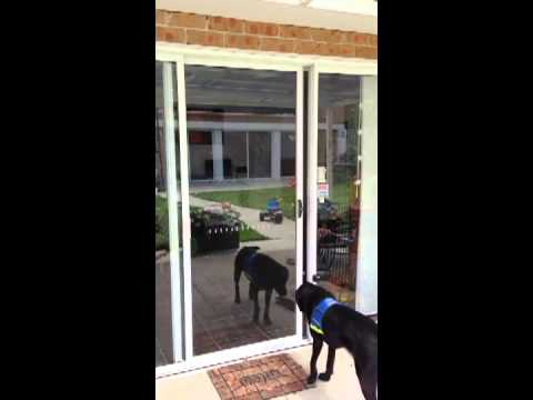 Autoslide DIY Automatic Door for your dog