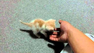 捨てられていた赤ちゃん猫
