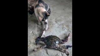 Funny Viral Best Cat Videos 2018 - DDOC