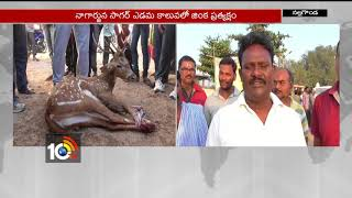 Locals save deer, hand it over to forest officials, in Nal..