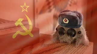 The world's most Slavic spider