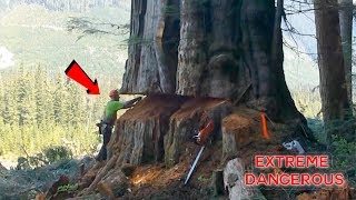 TOP 10 Most Dangerous Biggest Tree Felling Cutting Down with Chainsaw Machine EP. 2