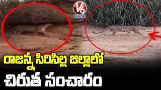 Leopard caught on camera in Telangana, video goes viral..