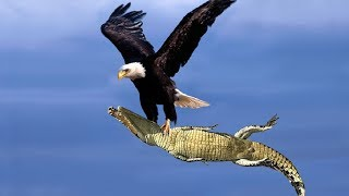 /the best of eagle attacks 2018 most amazing moments of wild animal fights wild discovery animals