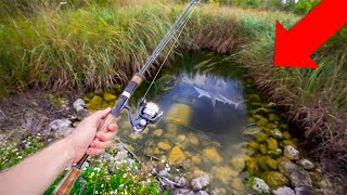 Fishing MICRO PONDS For NASTY EXOTIC Fish!! *Crazy*